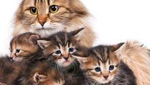 ab wann verstoßen katzen ihre jungen