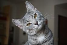 Intelligenzspielzeuge für Katzen