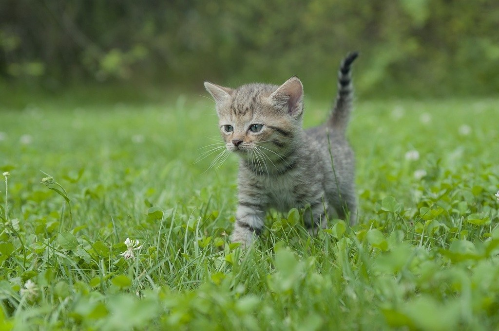 Cat With Kittens Images
