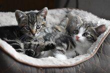 katzenfloehe in der wohnung