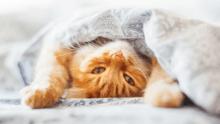 katzen beschäftigen