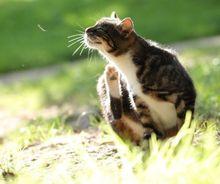 katzenfloehe erkennen