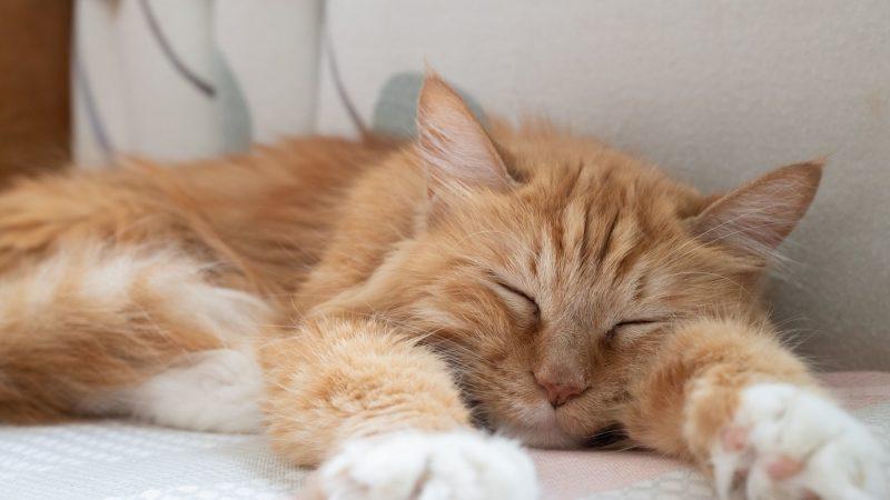 katzen träumen