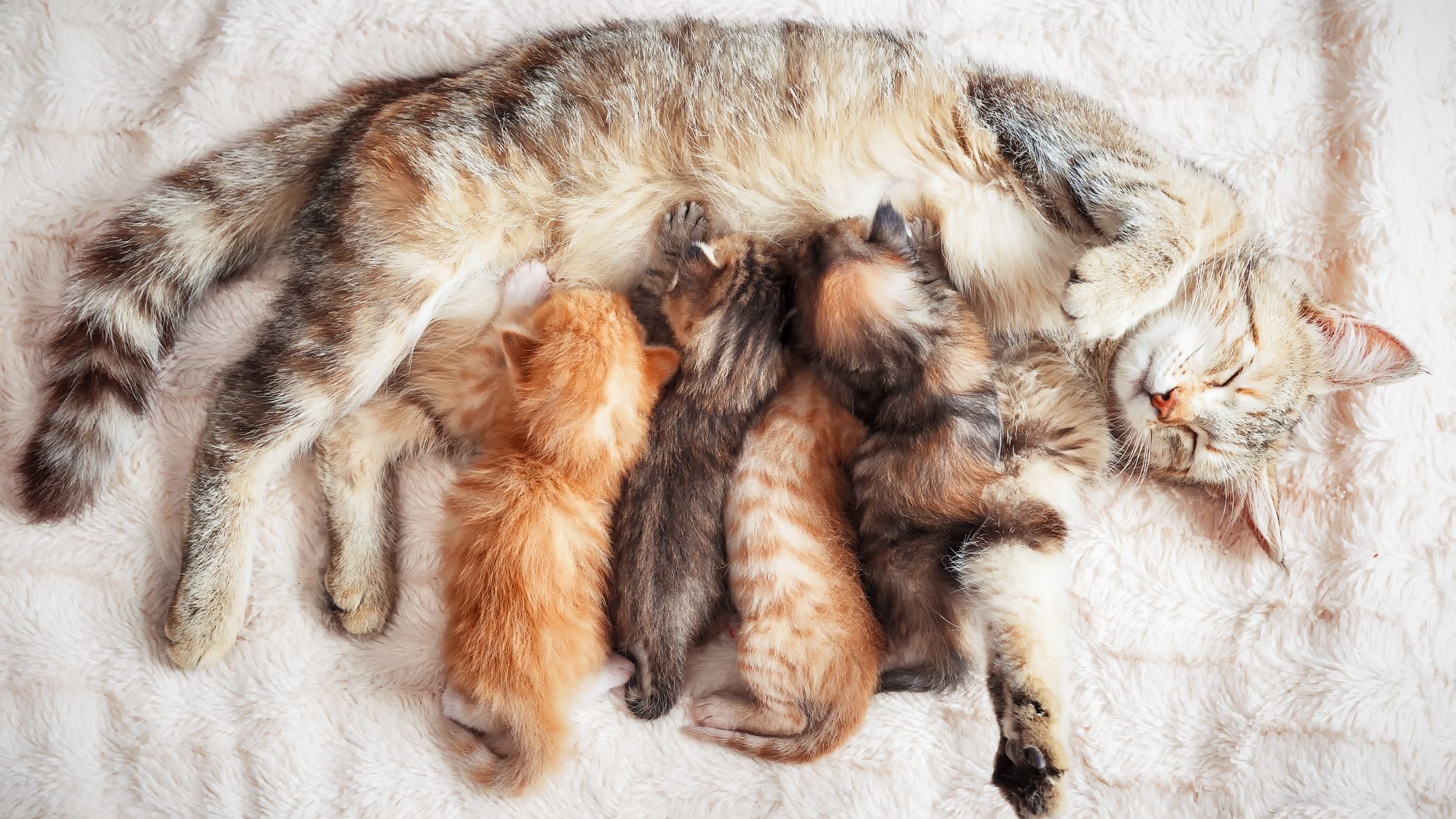 wie lange ist eine katze trächtig