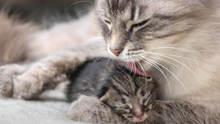 wie lange müssen katzenbabys bei der Mutter bleiben