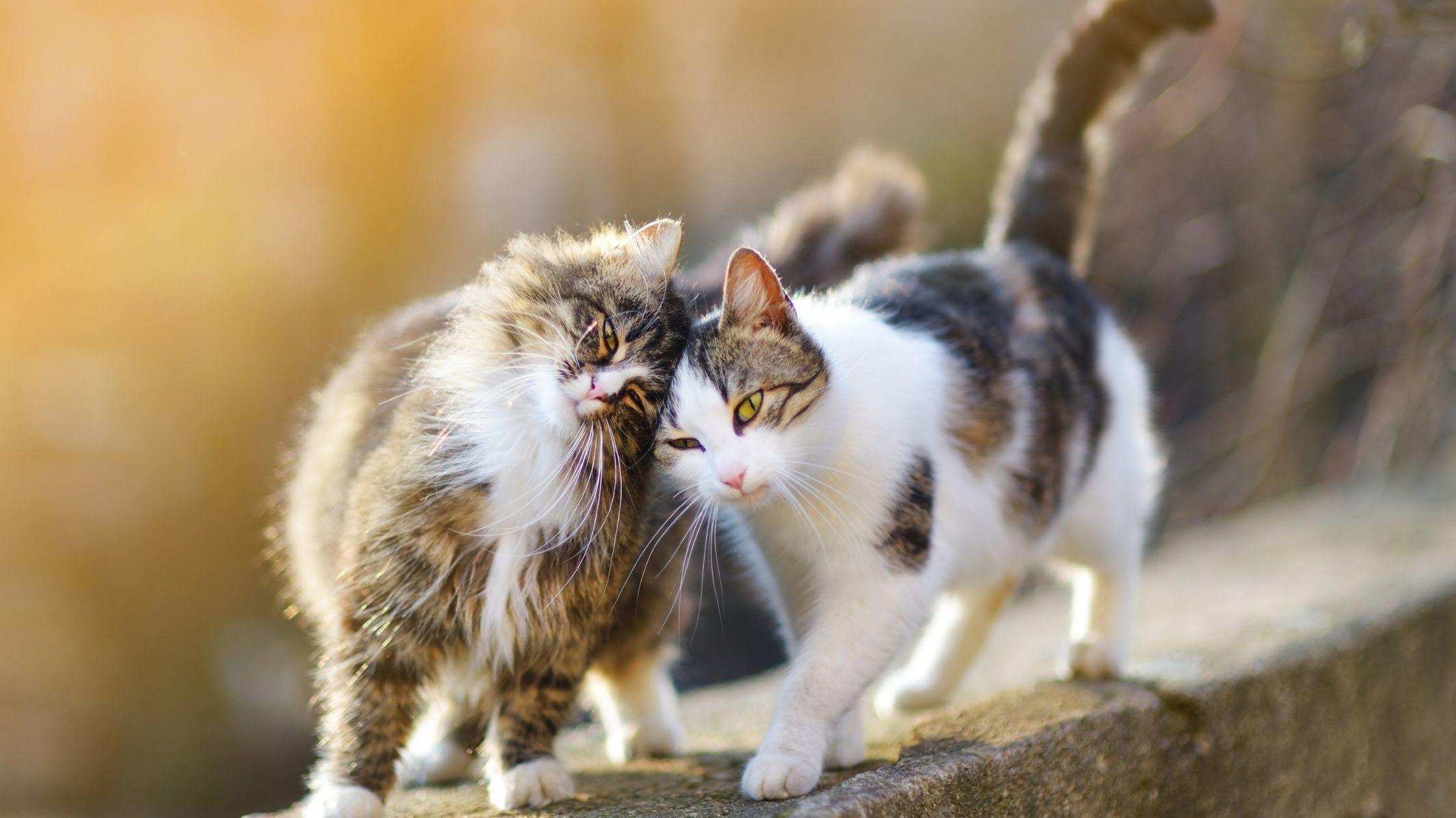 katzen treffen sich